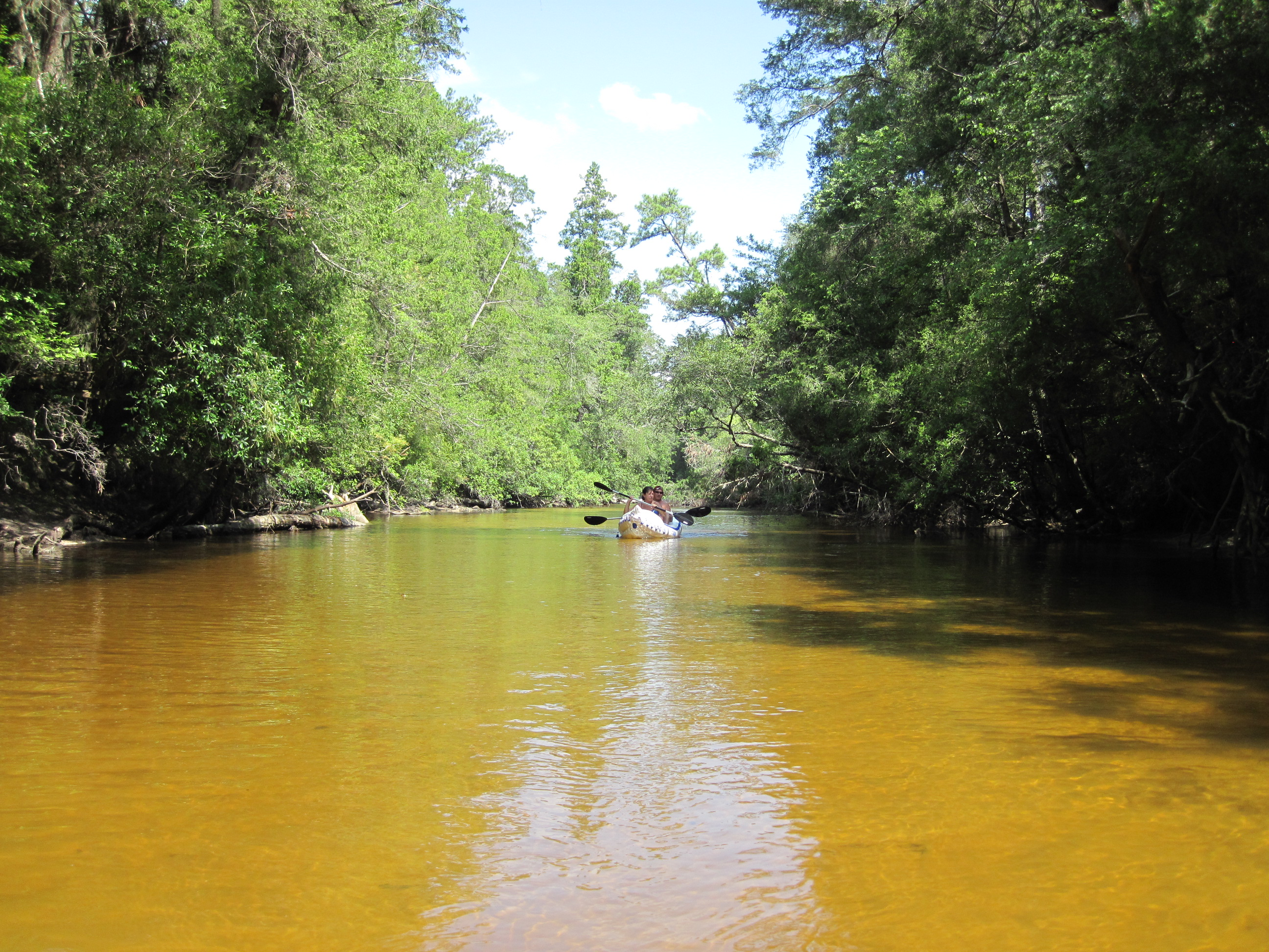 Canoeing On Floridas Blackwater River Northwest Florida Outdoor - Rivers in florida