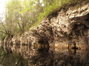 Limestone Formations on the Suwannee River. Photo by Vitor Baptista