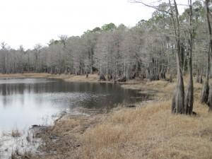 Hiking At Pine Log State Forest Near Ebro Florida