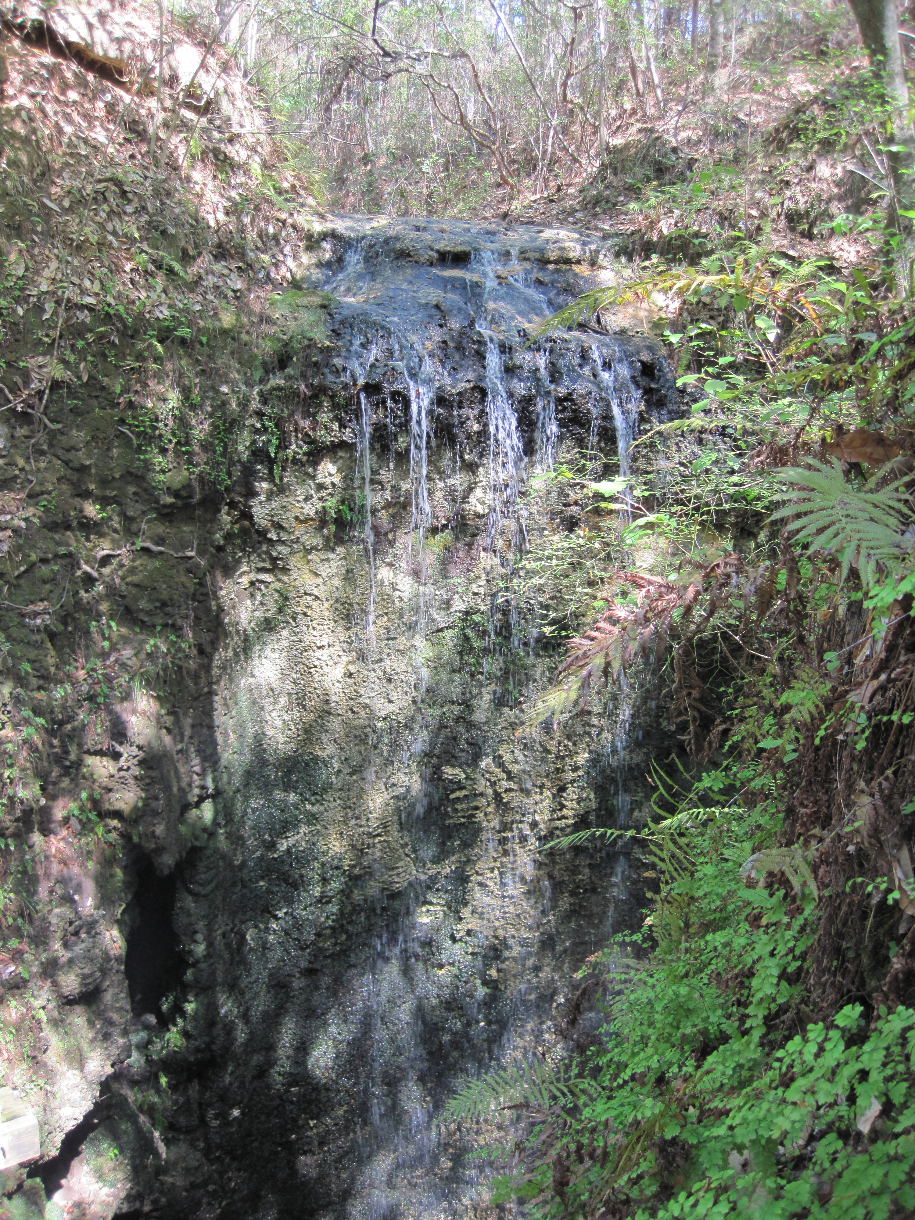 Visit Florida's Tallest Waterfall at Falling Waters State ...