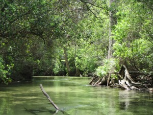 Clear waters and green canopy on Turkey Creek, Niceville.