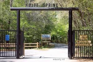 Pitt Spring Entrance
