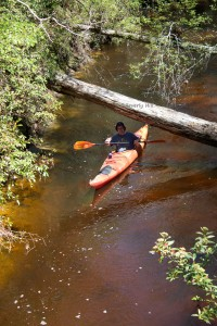 A kayaker enjoying a leisurely float down Econfina Creek.