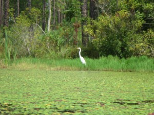 A heron hunts for food along the shore of Karick Lake.