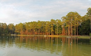 Krul Lake in Blackwater River State Forest