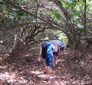 Following the shaded path to a secluded beach.