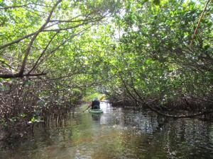 A kayaker glides through the mangrove tunnels at St. Lucie Inlet Preserve.