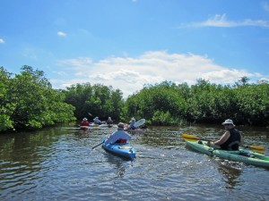 A group of kayakers entering the mangroves of St. Lucie Inlet Preserve.