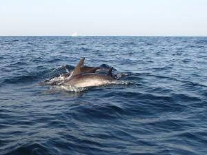 Dolphin precision