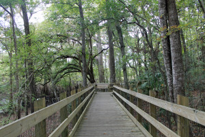 Boardwalk at Fanning Spring