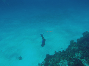 Snorkeling over the Palancar Reef. Depths 80+.